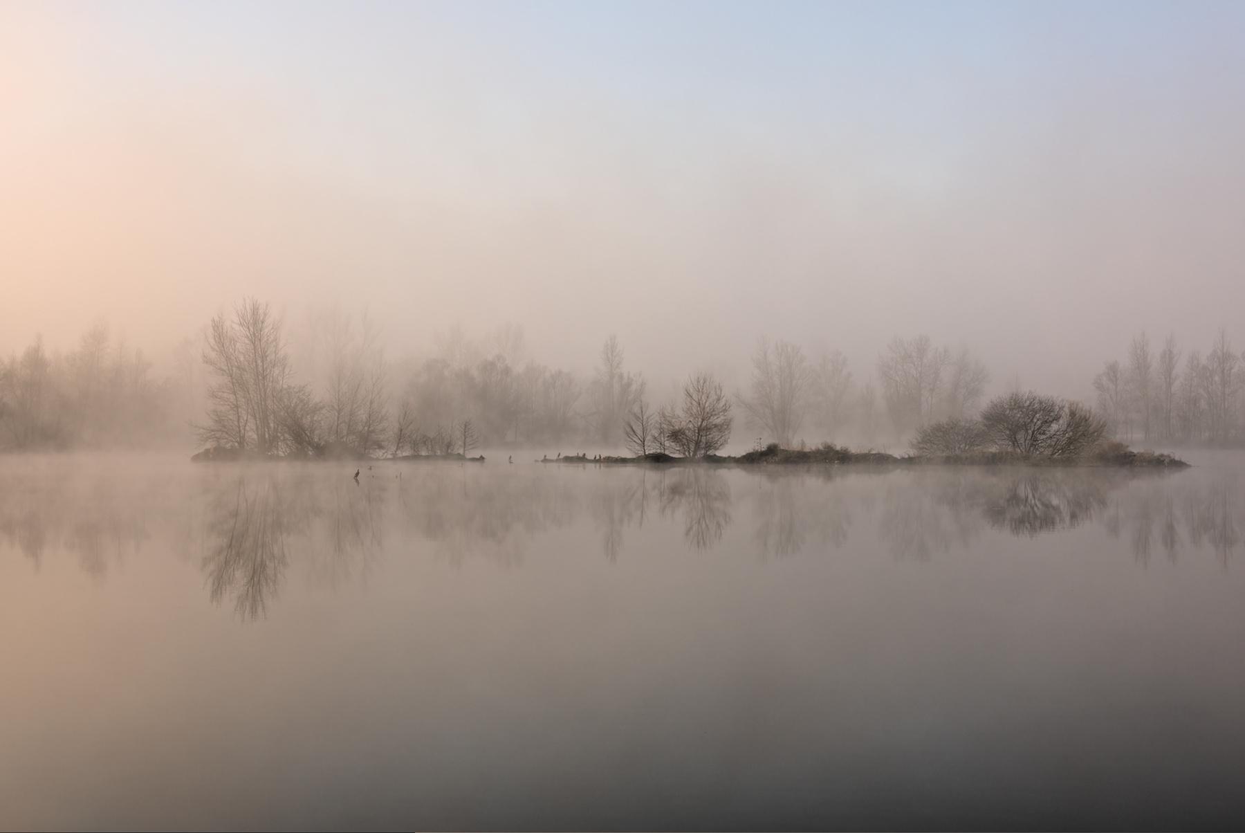 Cormorans dans la brume à l'aube